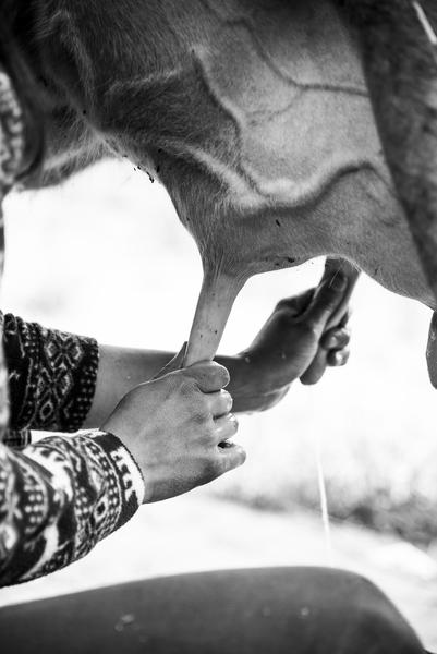 Festa del Latte © Anna Magri